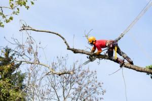 Abattage et élagage d'arbre Gironde Bordeaux